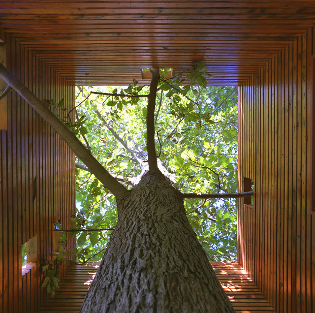 Дизайн дома с растущим деревом внутри