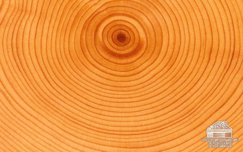 Строительство дома из дерева – 12 интересных фактов! - Доминант