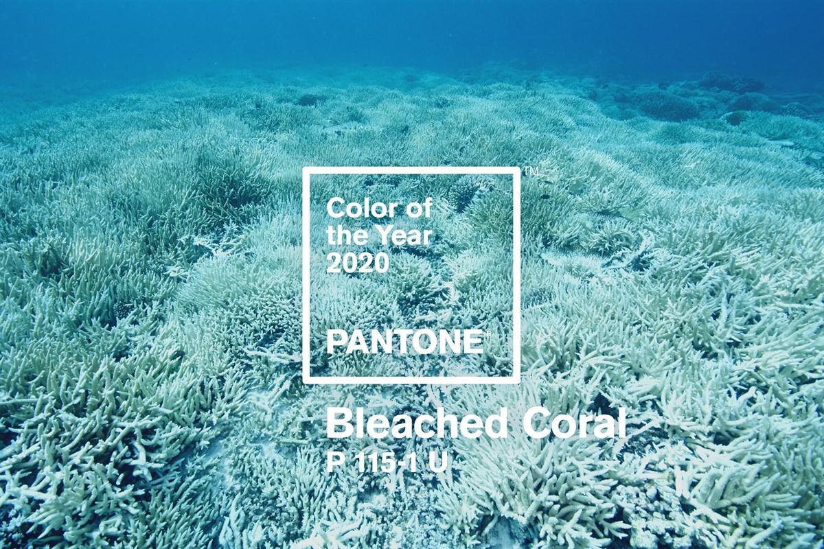 главный цвет 2020 года