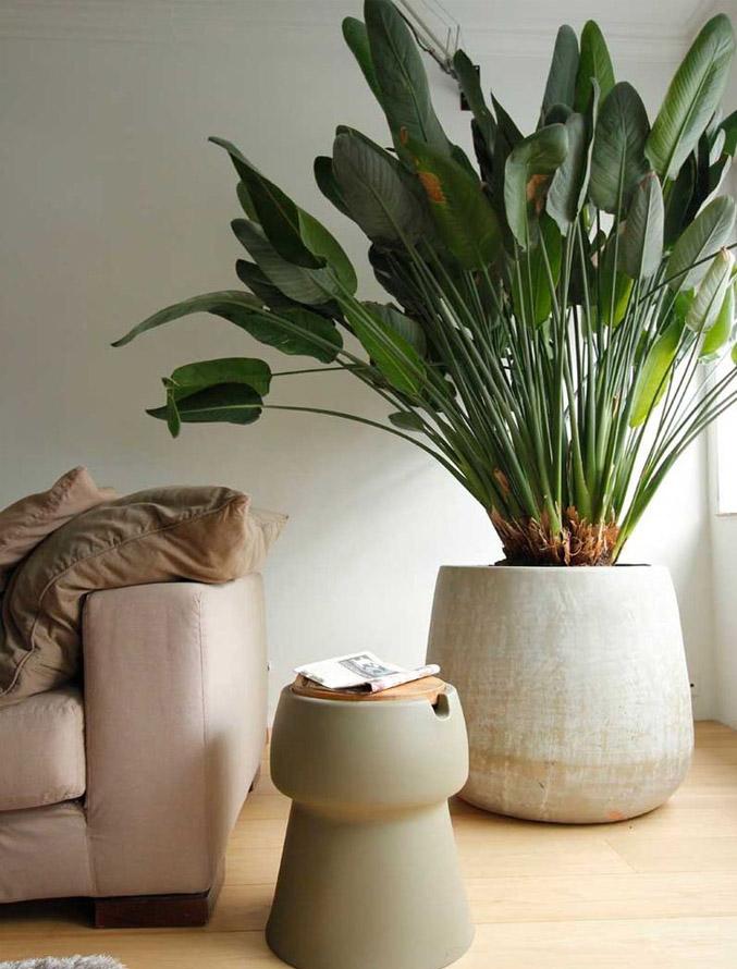растения в деревянном доме