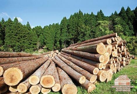 Впервые в Украине: электронные биржевые торги по реализации необработанной древесины!