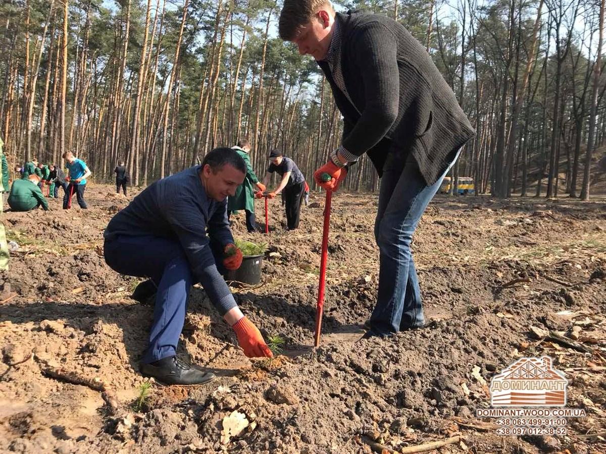 Управління лісовими ресурсами та їх постійне поновлення
