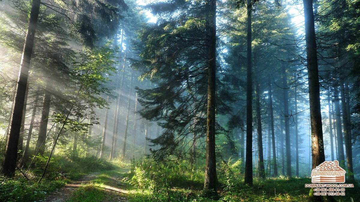 спасение леса