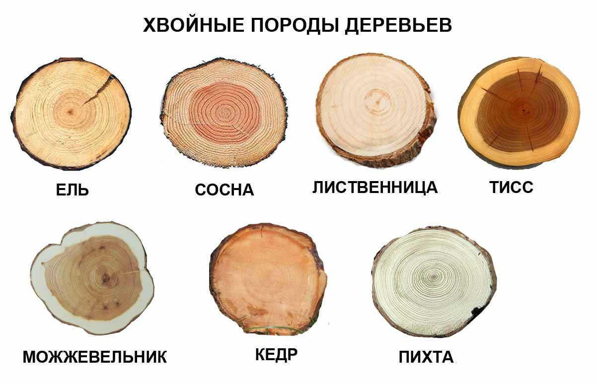 Порівняння різних порід деревини для будівництва