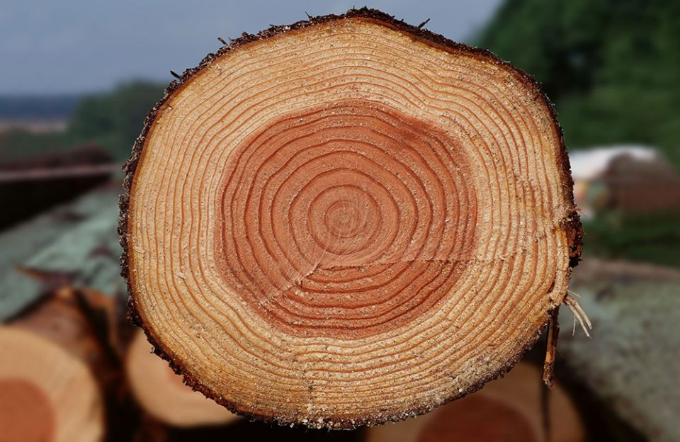 Використання соснової деревини для виробництва дерев'яного комплекту будинку
