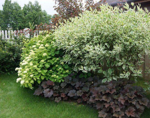 Які рослини краще посадити в саду??