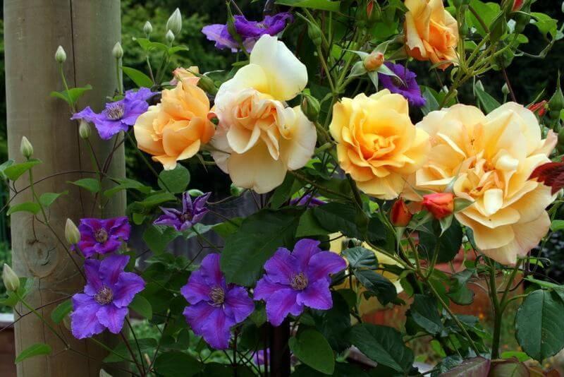 Як розташувати рослини в саду??